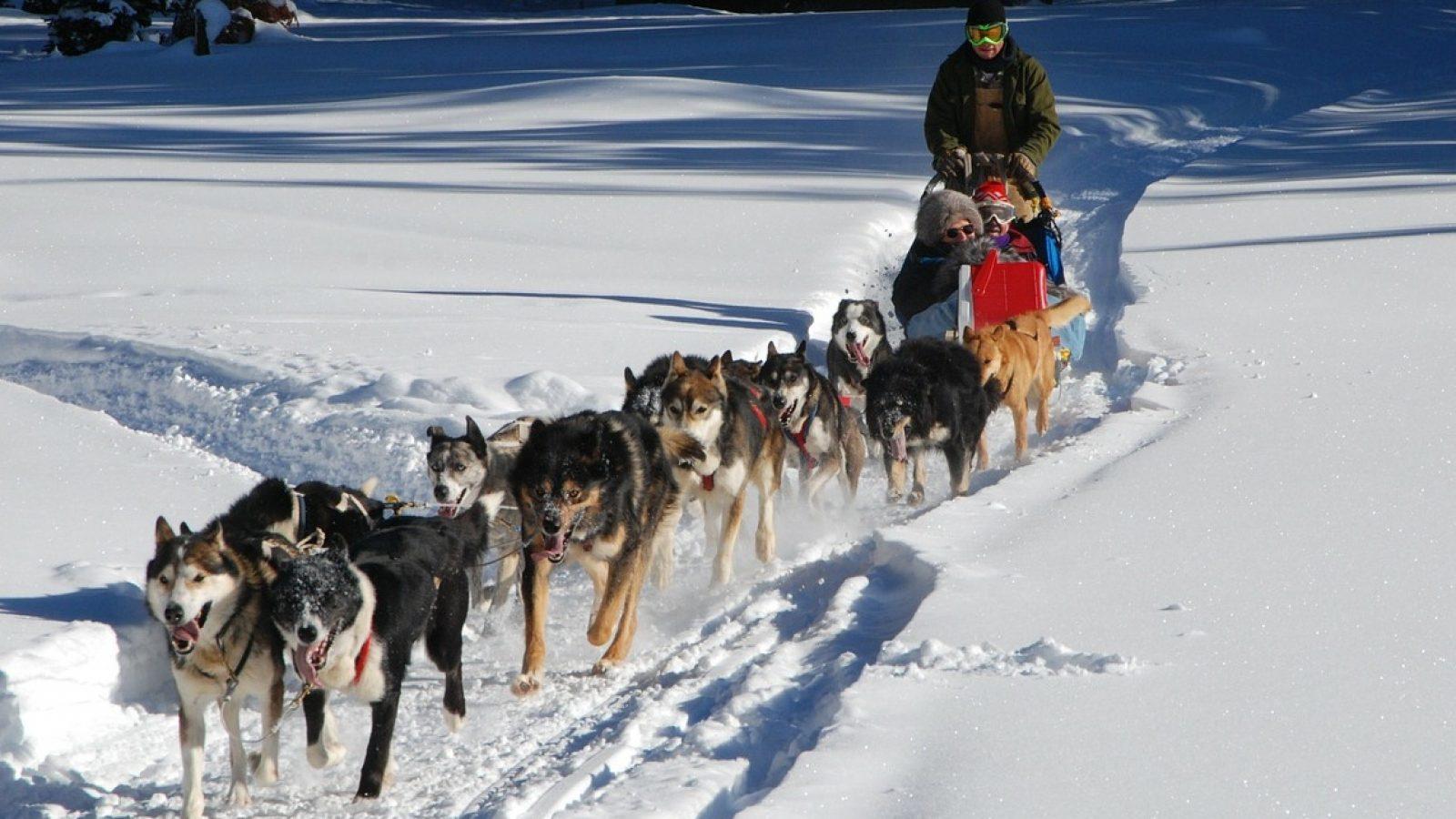 dog-sled-278875_1280 Cropped (1)